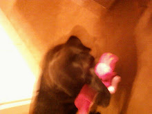Sadie's piggy toy!