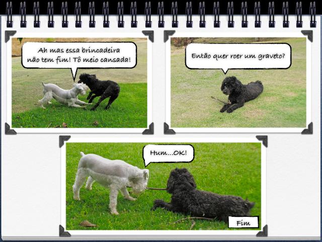 foto cachorros brincando