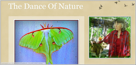 The Dance Of Nature from Patty Ann Smith