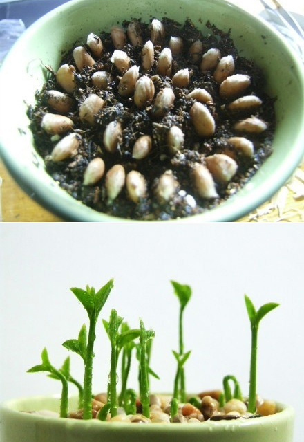 Artfully crafted five plants you can grow from fruit seeds for How do you plant lemon seeds