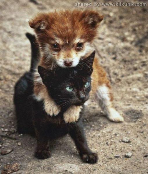 http://4.bp.blogspot.com/-5fd0UjZi_gQ/TXhGirAP1AI/AAAAAAAAQhg/vktpXjd7HD4/s1600/these_funny_animals_632_640_32.jpg