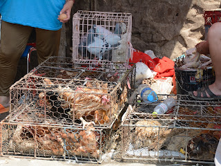 Chickens for sale at the Fahaisi street market in Beijing