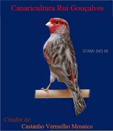 Canaricultura Rui Gonçalves
