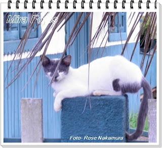 linda foto de gatinho branco
