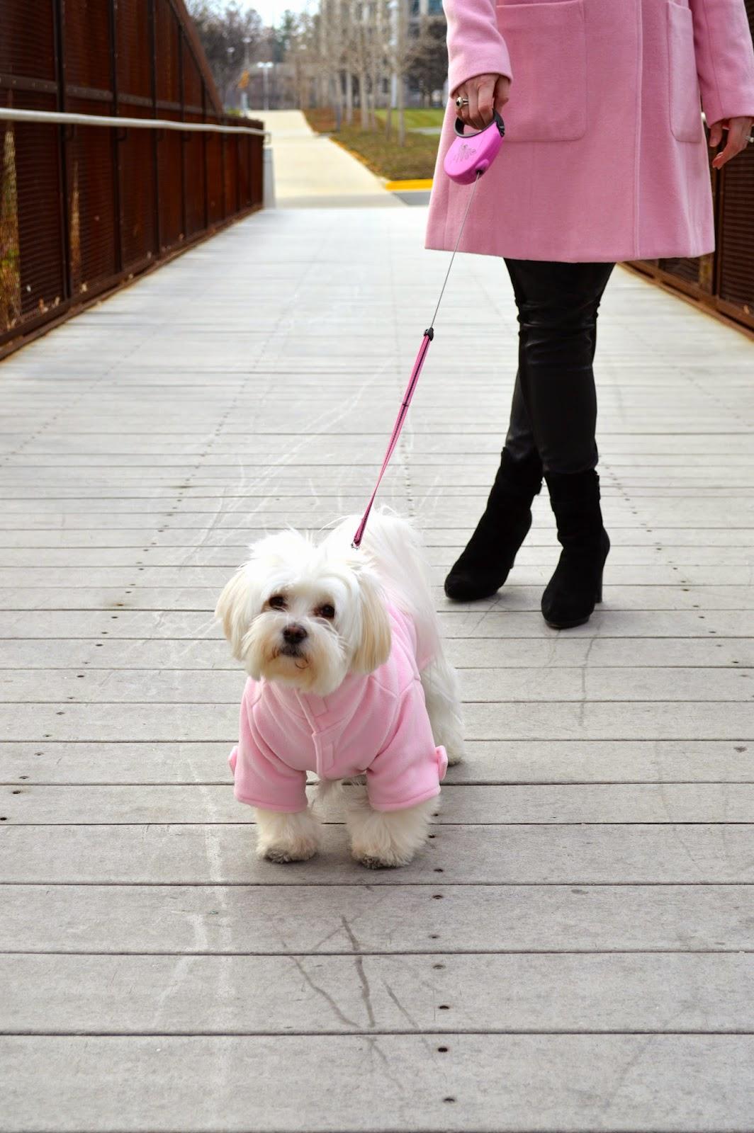 Ella-morkie-puppy