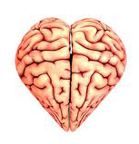 Does the heart have a brain?