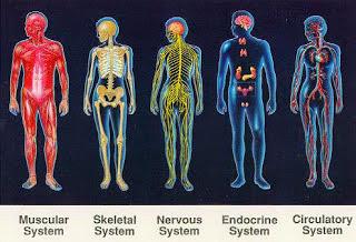 10 keunikan tubuh manusia yang belum diketahui, 10 misteri tubuh manusia