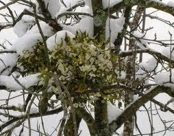 [IMG]http://4.bp.blogspot.com/-5gKcCjPtH8s/UrVfEwWIIeI/AAAAAAAAAlc/kznsr4p6yU0/s1600/vischio-albero.jpg[/IMG]