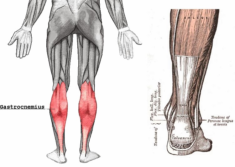 Running writings: Achilles tendonitis in runners: A degenerative ...