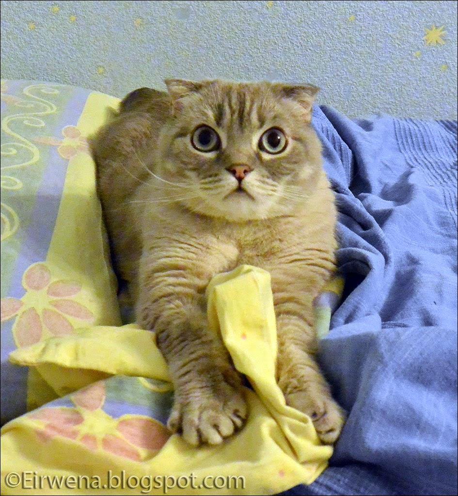 Journal d 39 un chat les aventures d 39 eirwena dans de beaux - Linge qui sent mauvais ...