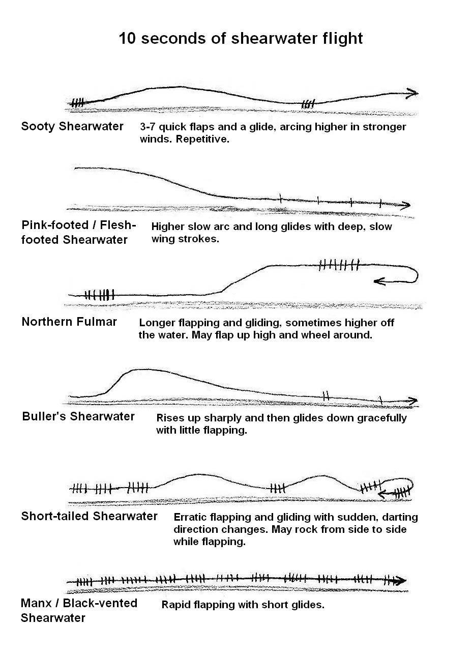 Bird Flight Patterns Custom Design
