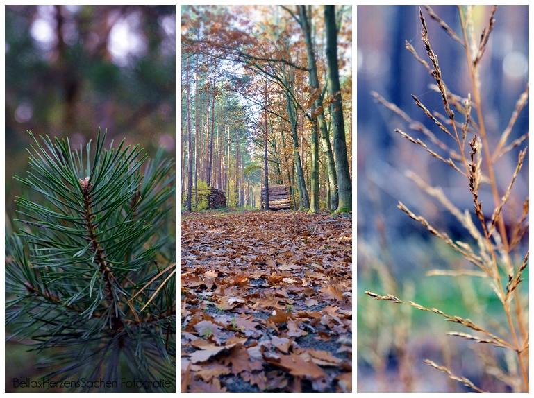 Waldcollage