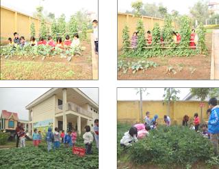 Xây dựng vườn rau, quả tại trường mầm non