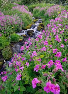 Río y flores de primavera