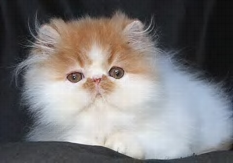 Sharing hobi kucing yang menghasilkan..