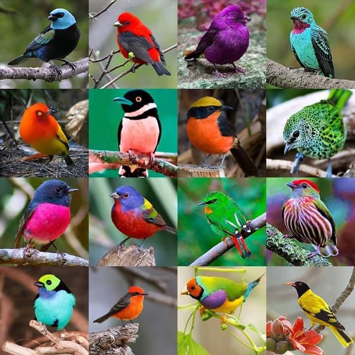 ¡Qué los pájaros nunca dejen de cantar!