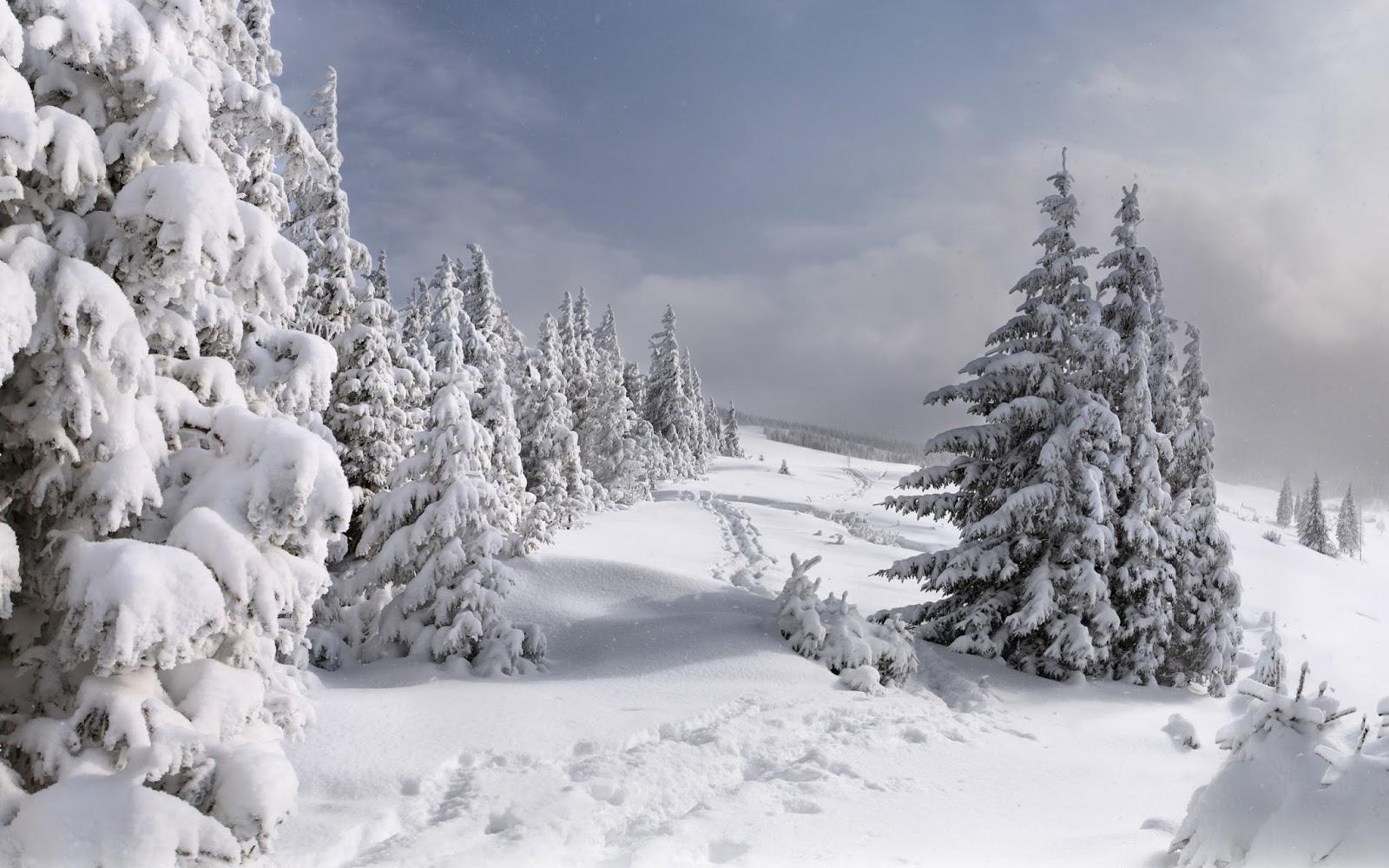 Солнце зимой и летом картинки