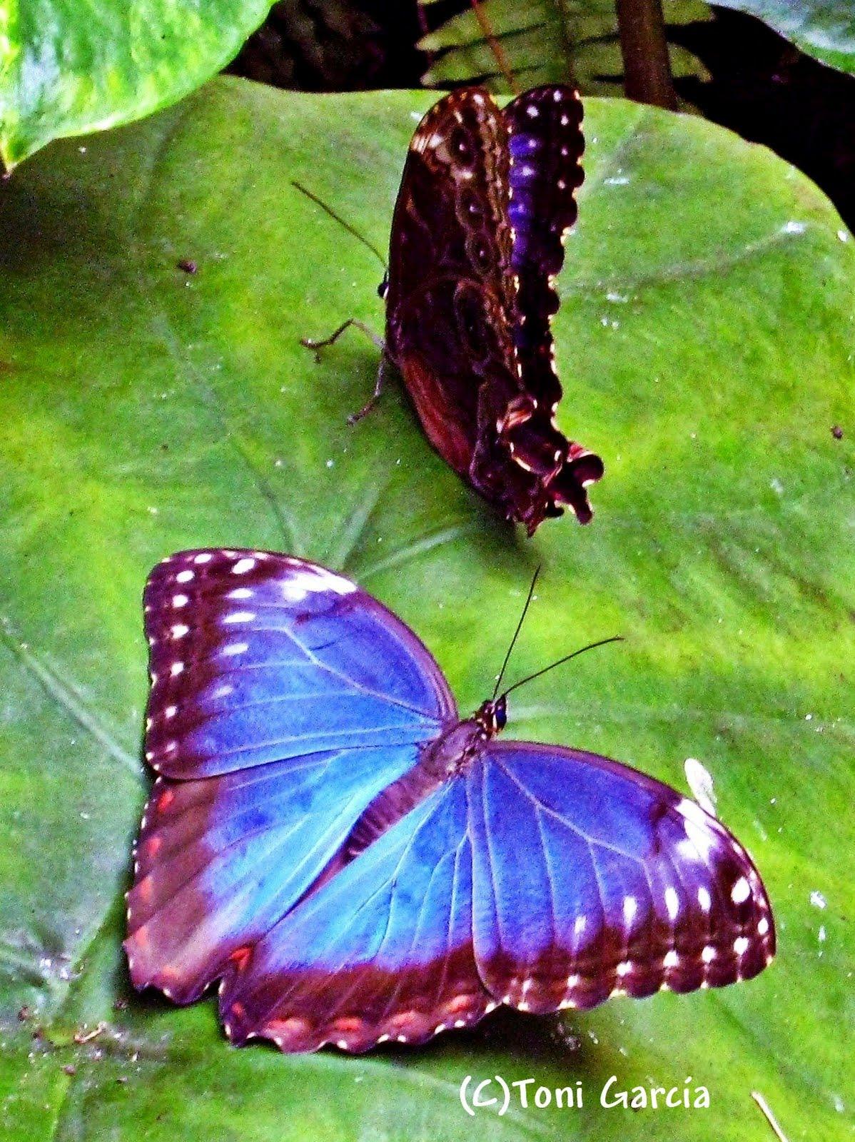 Rutas escapadas y otras cosas interesantes for Villas las mariposas
