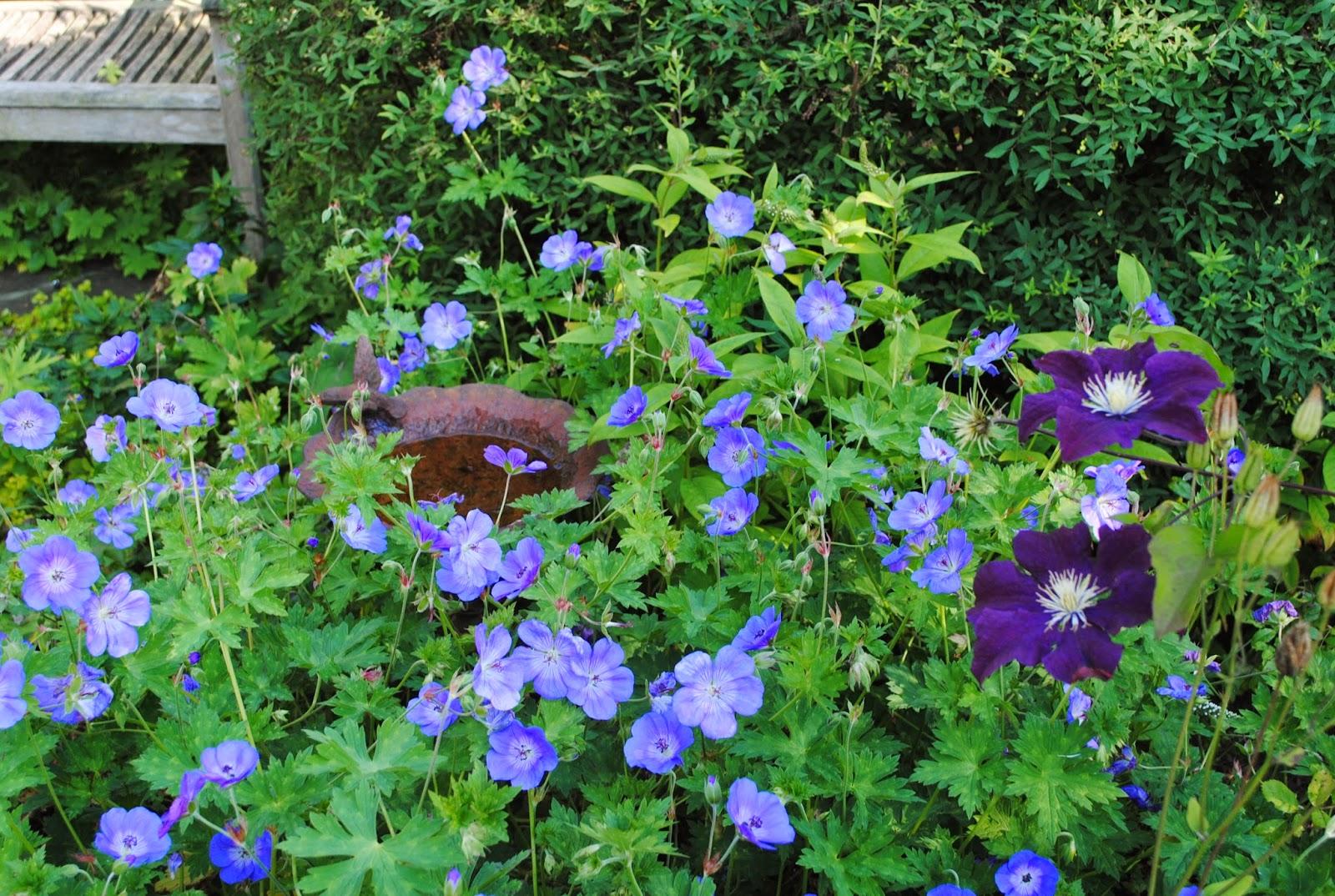 La passion d 39 anne marie le jardin en juillet for Jardin 5 juillet biskra