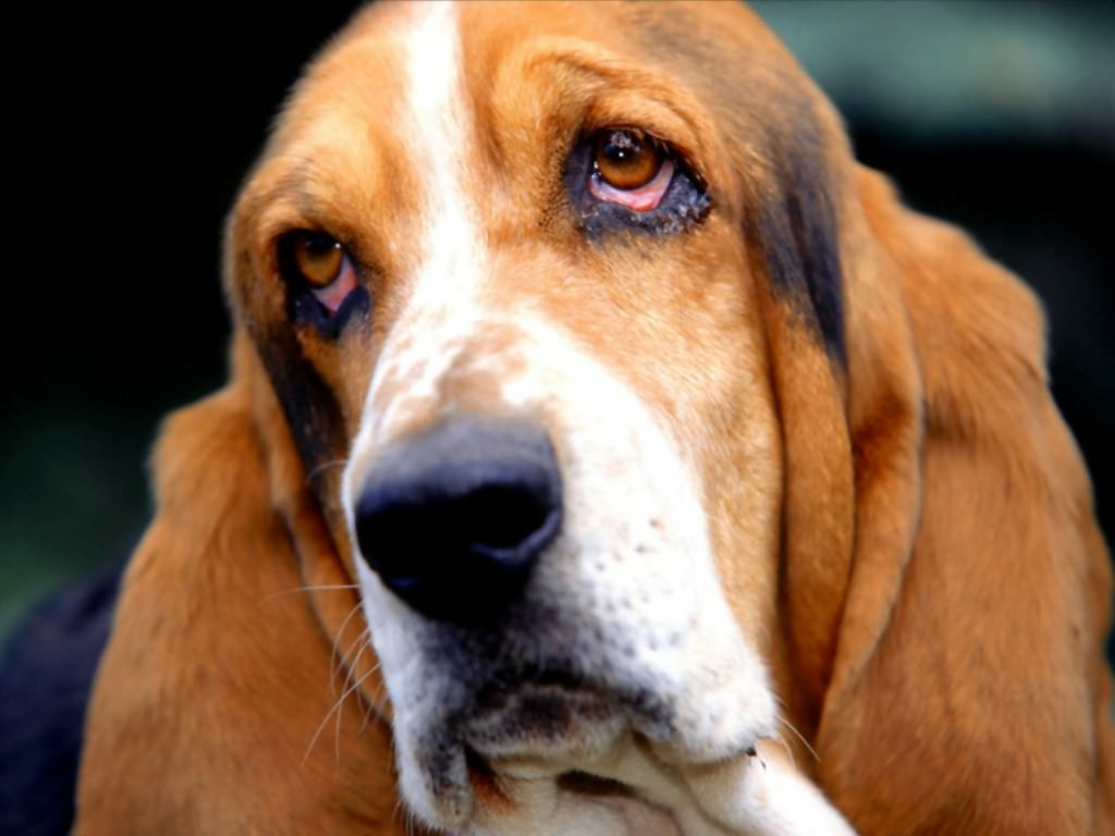 http://4.bp.blogspot.com/-5iT_Eh_RrEk/TcwBelGP2YI/AAAAAAAAM2w/C9TxIz5drzw/s1600/Calm%2Bdog-414240.jpeg