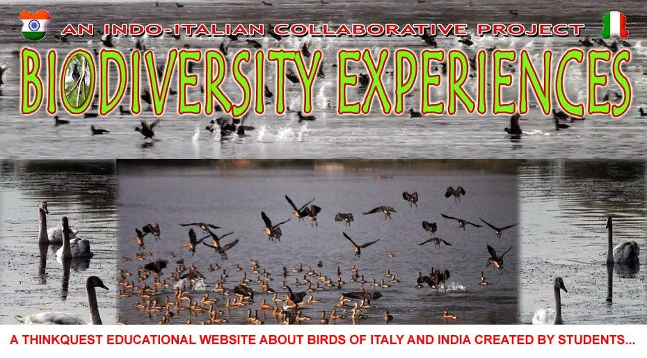 Biodiversity Experiences