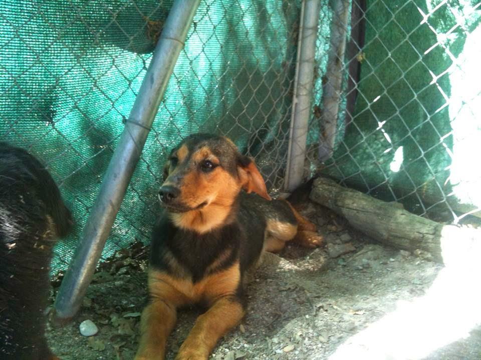 KEKA rescatada de la perrera