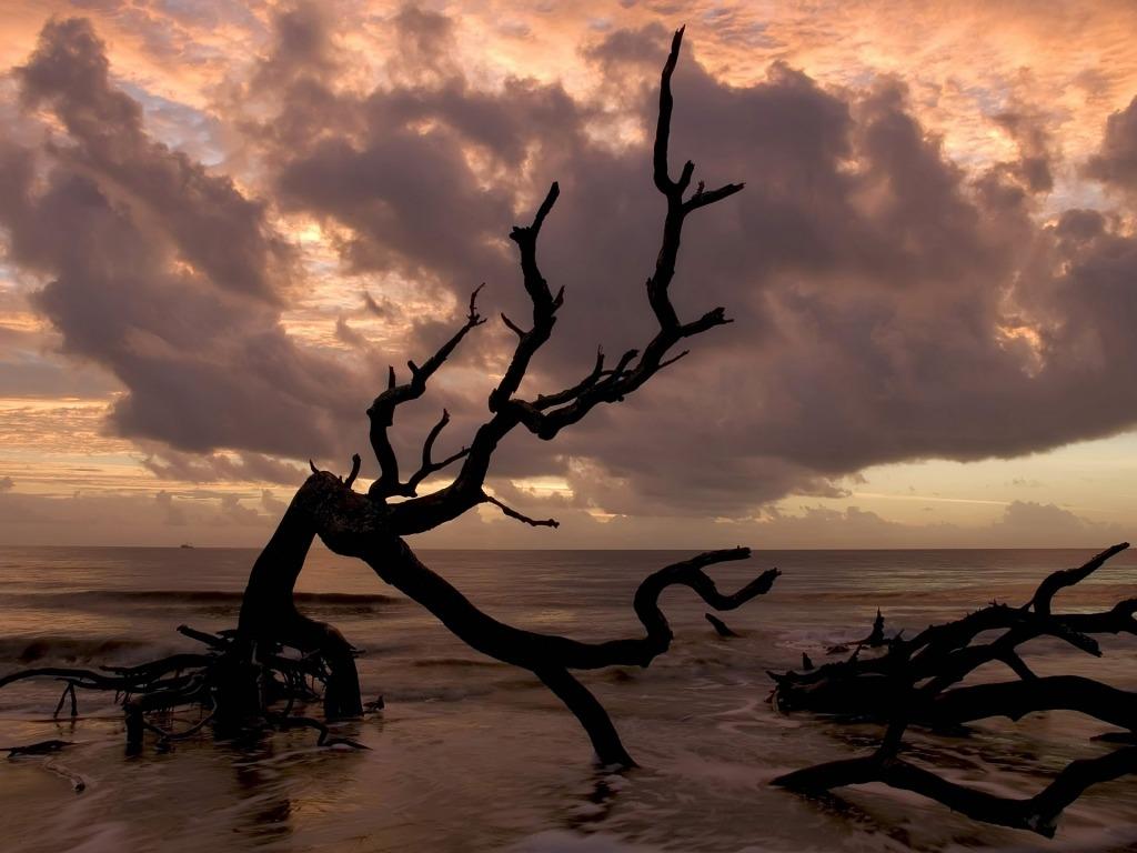 A la luz de la luna. - Página 2 Sea_tree_wallpaper_beaches_nature_wallpaper_1024_768_1393