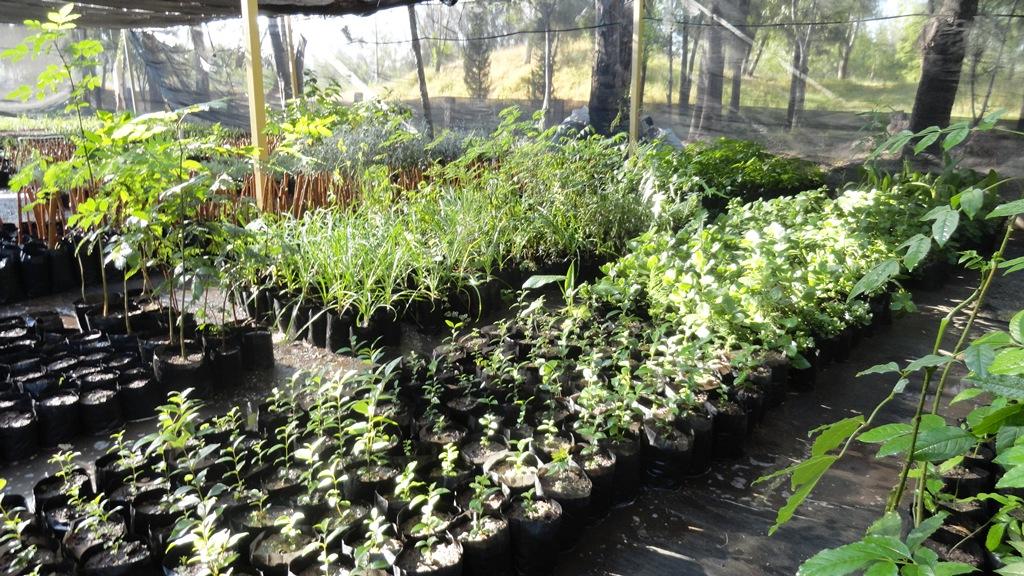 La grilla cierra la smae la entrega de arboles y plantas for Viveros de plantas de ornato