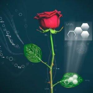 buongiornolink - Elettronica organica e biologia vegetale sbocciata la prima rosa bionica