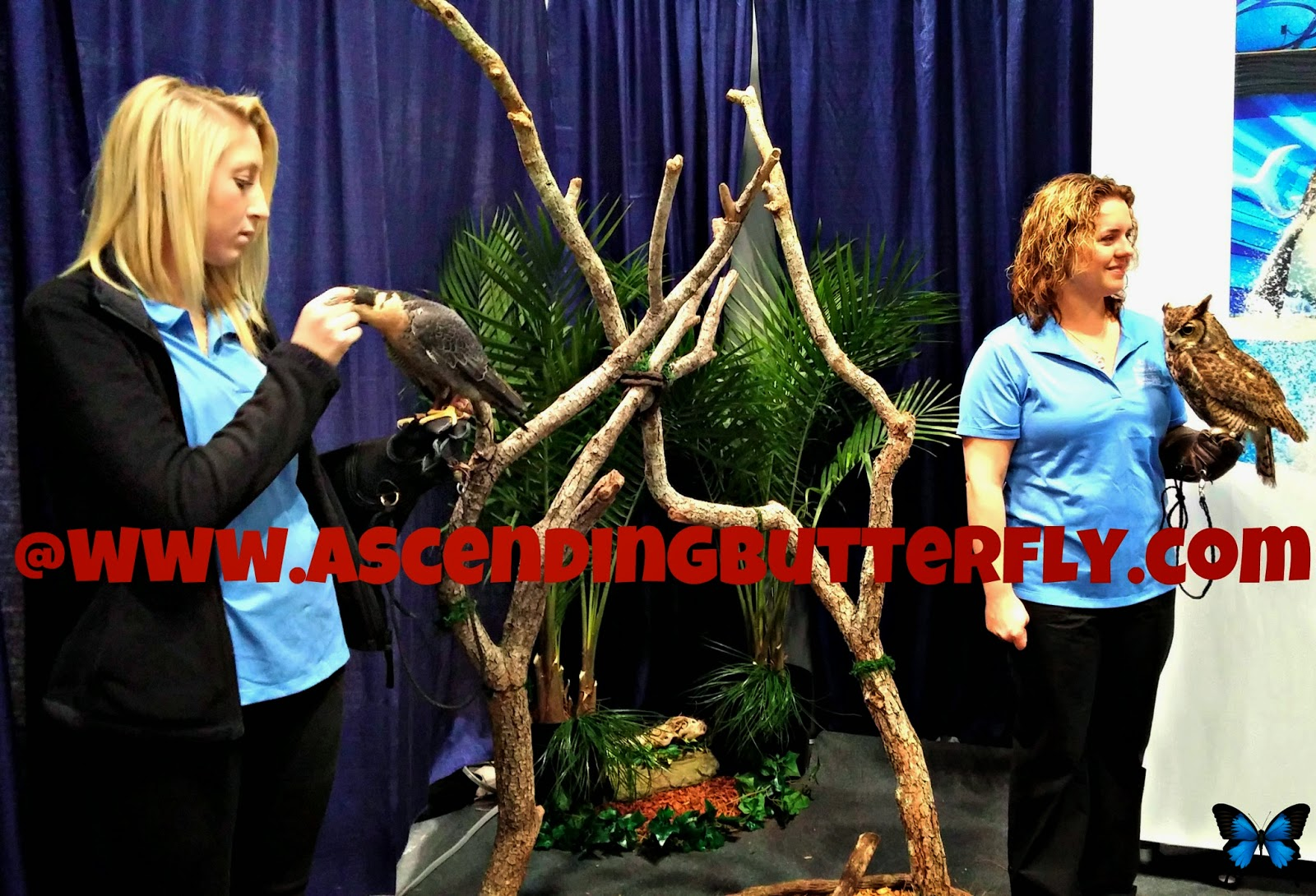 Sea World Display Area at 2014 New York Times Travel Show, Birds, Owl