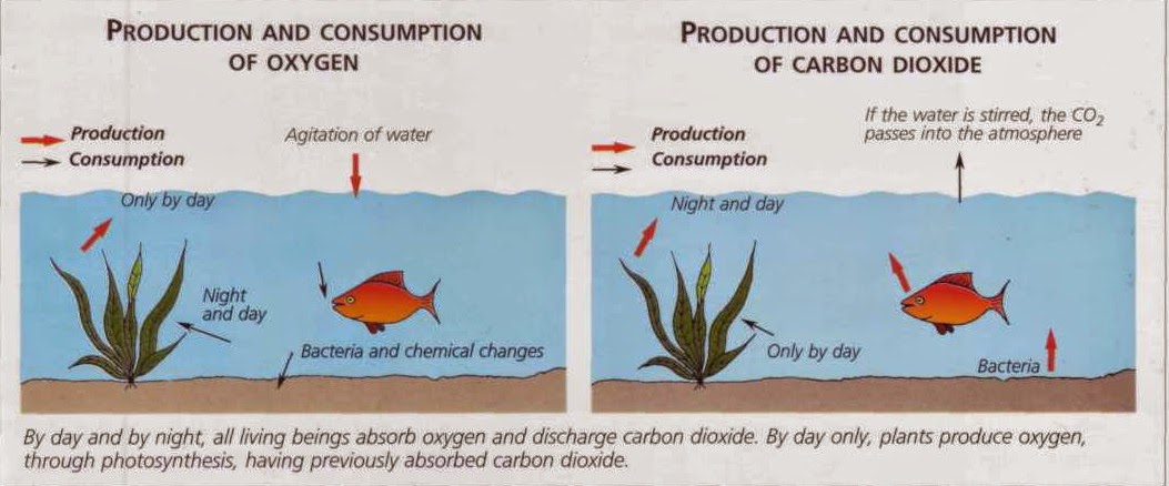 oxygen and carbon dioxide production and consumption