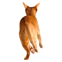 running cat cut out