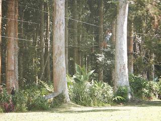 Treetop Adventure Flying Fox