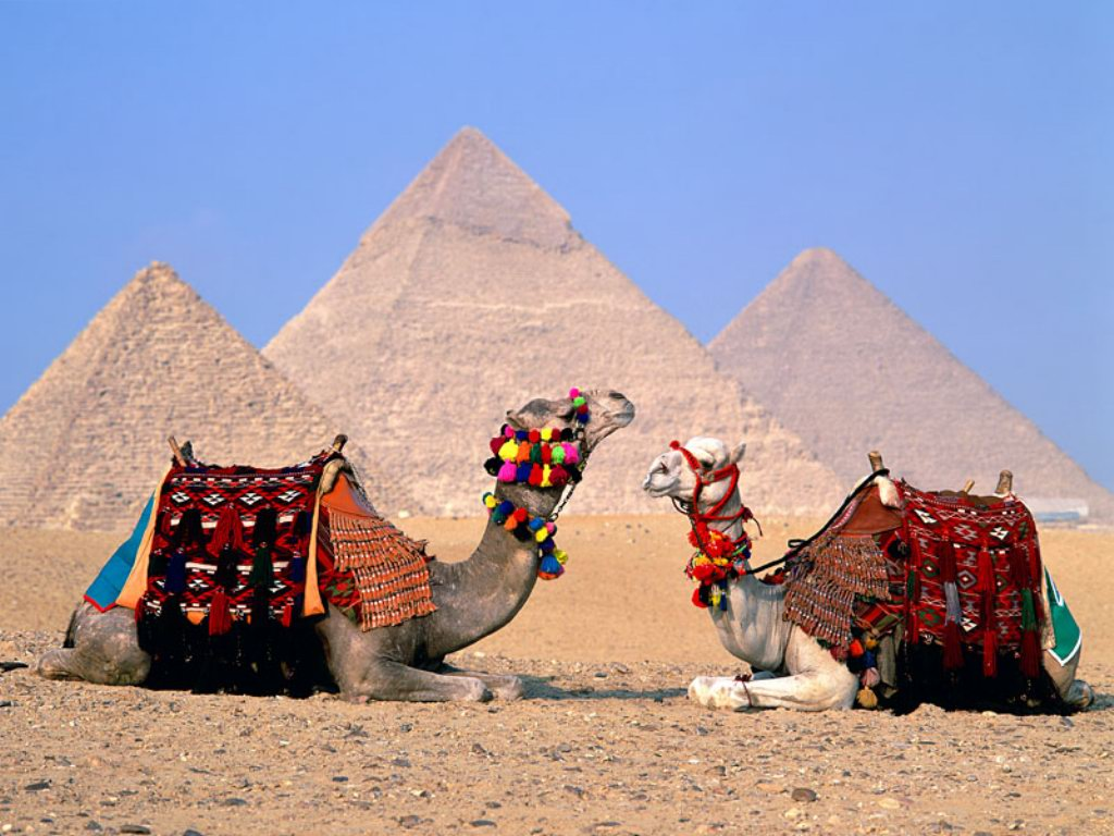 http://4.bp.blogspot.com/-5lN63tBSjRA/TwF3N8twp0I/AAAAAAAAFlM/rh-npLVjuTg/s1600/egypt-cairo-camels-HD_wallpapers.jpg