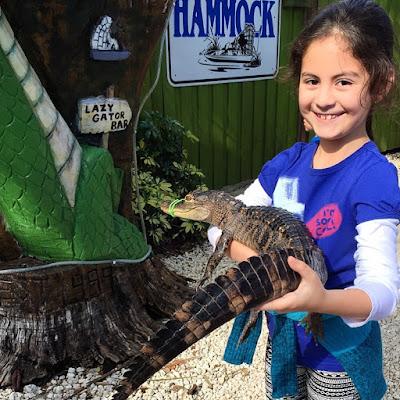 black-hammock-gator