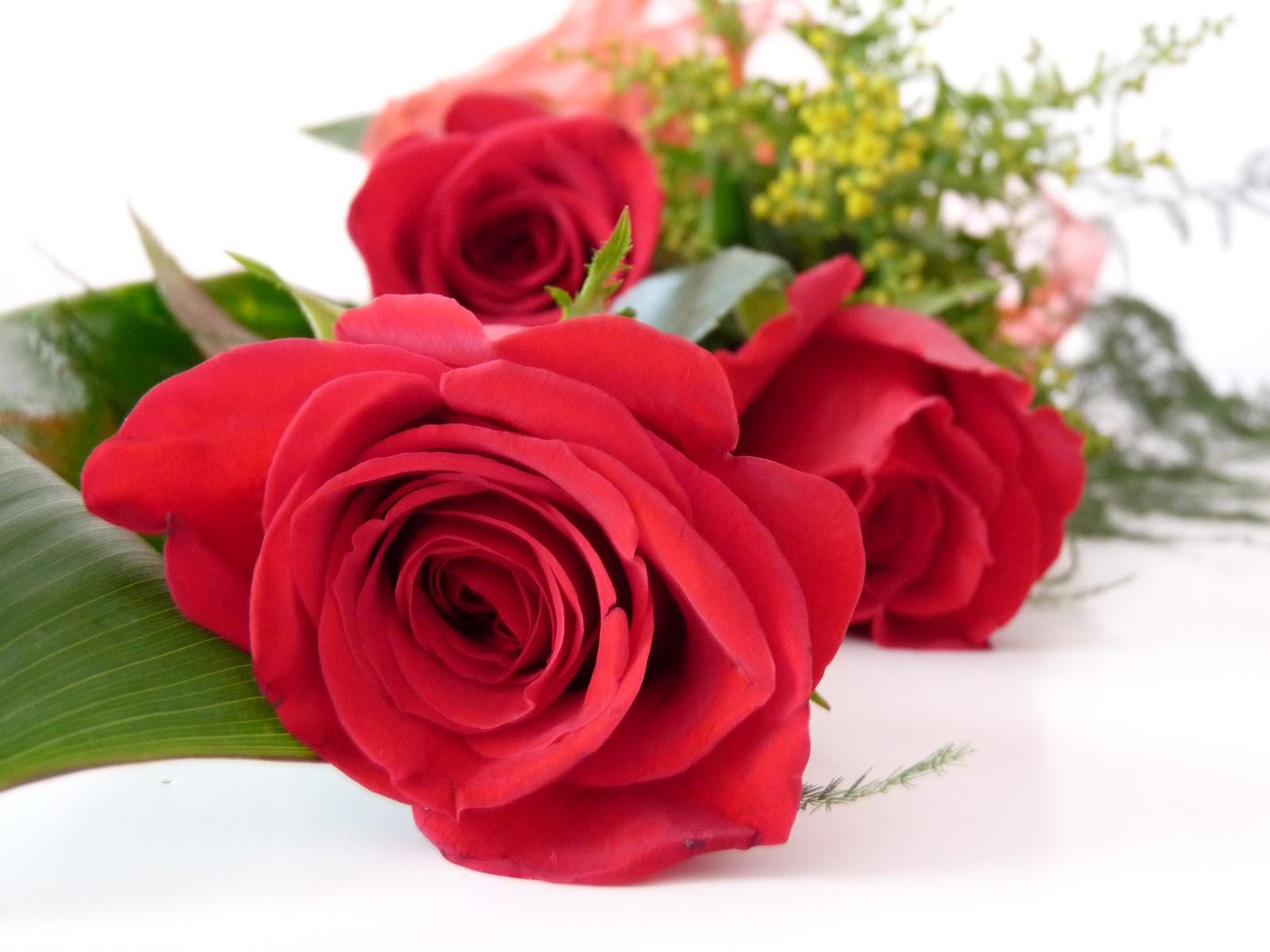 Moja radosť-kvety