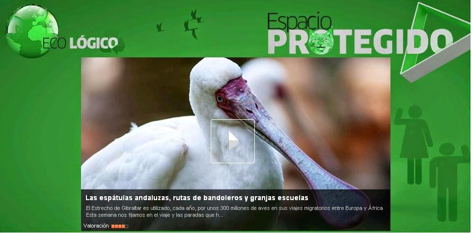 http://alacarta.canalsur.es/television/video/las-espatulas-andaluzas--rutas-de-bandoleros-y-granjas-escuelas/1641762/28