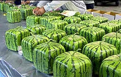 Watermelons Japan. English version