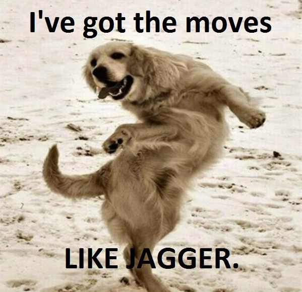 I've Got Moves Like Jagger (dog)