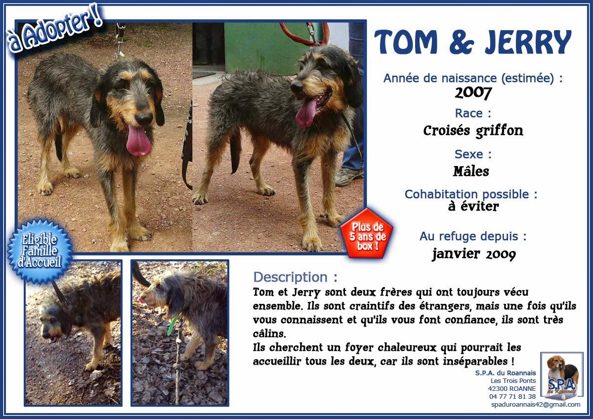 TOM et JERRY,  Griffon typés nivernais 11 ans (9  ans de refuge) adoptants ou famille d'accueil -  SPA DE ROANNE (42) Fiche-TOM%2526JERRY-2007