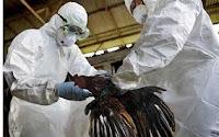 Cara mencegah flu burung, virus avian influenza, Virus H5N1