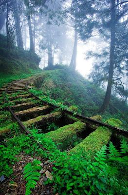 Vías del tren olvidadas en el bosque - Paisajes bonitos