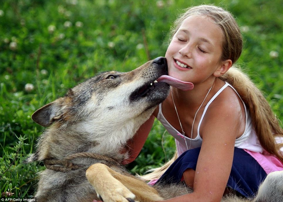 This Family Just Tamed A Wolf & Actually Made Them Their Pets! Find Out How They Did That HERE >>>
