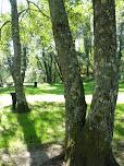 Parque junto à nascente