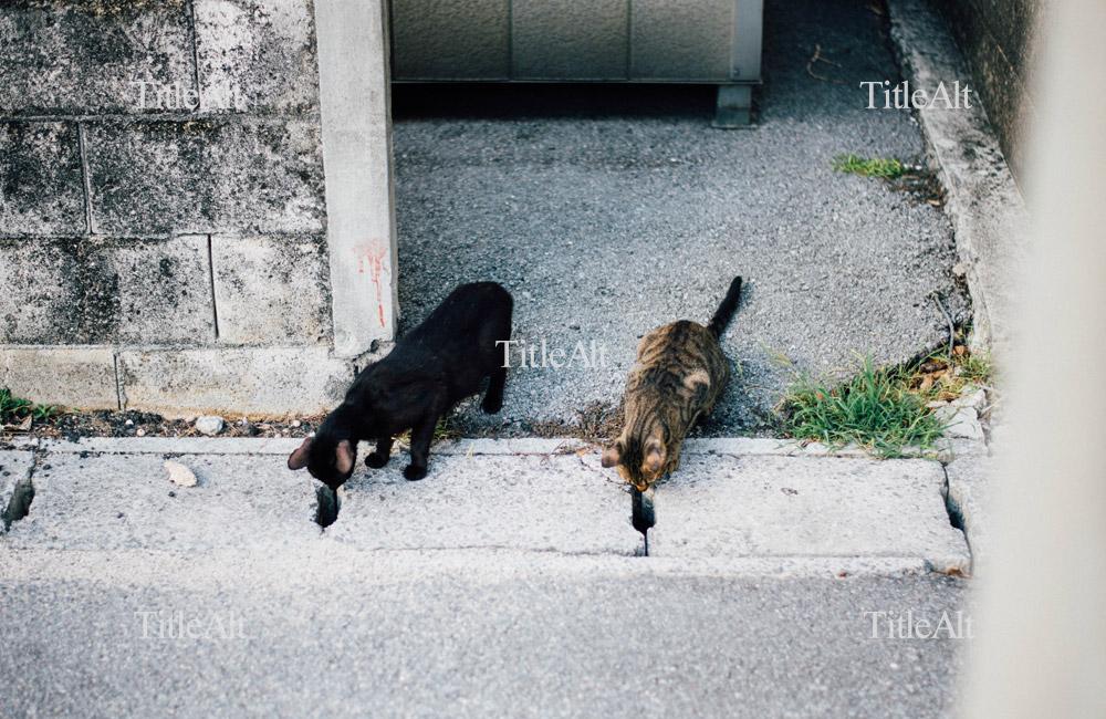 2匹揃って覗くノラ猫さん
