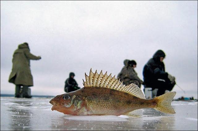 Зимняя ловля ершей