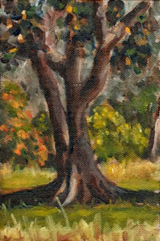 Oil painting of the trunk and lower foliage of a Moreton Bay Fig (largely in shadow) with afternoon sunlight illuminating grass and shrubs in the background.