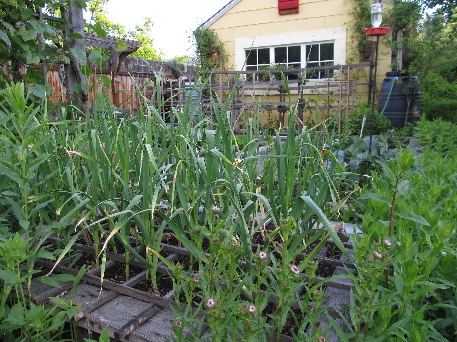 montana wildlife gardener repurposed garden tool trellis