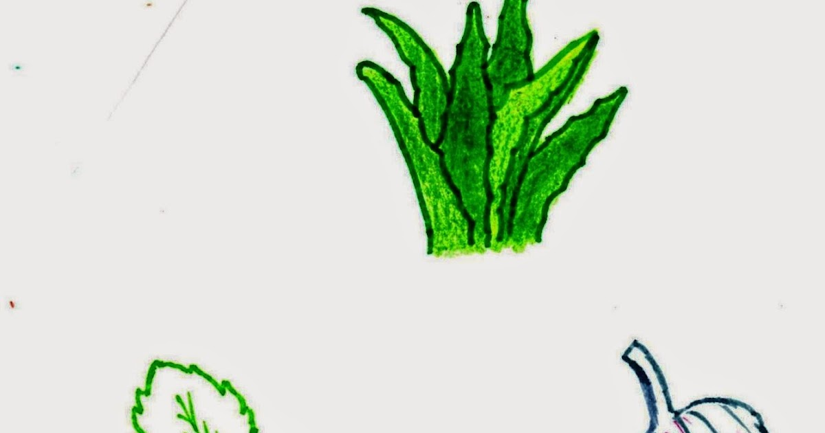 Planta de aloe para el picor vaginal