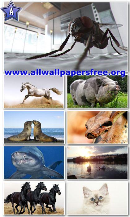 40 Stunning Animals HD Wallpapers 1366 X 768 [Set 11]